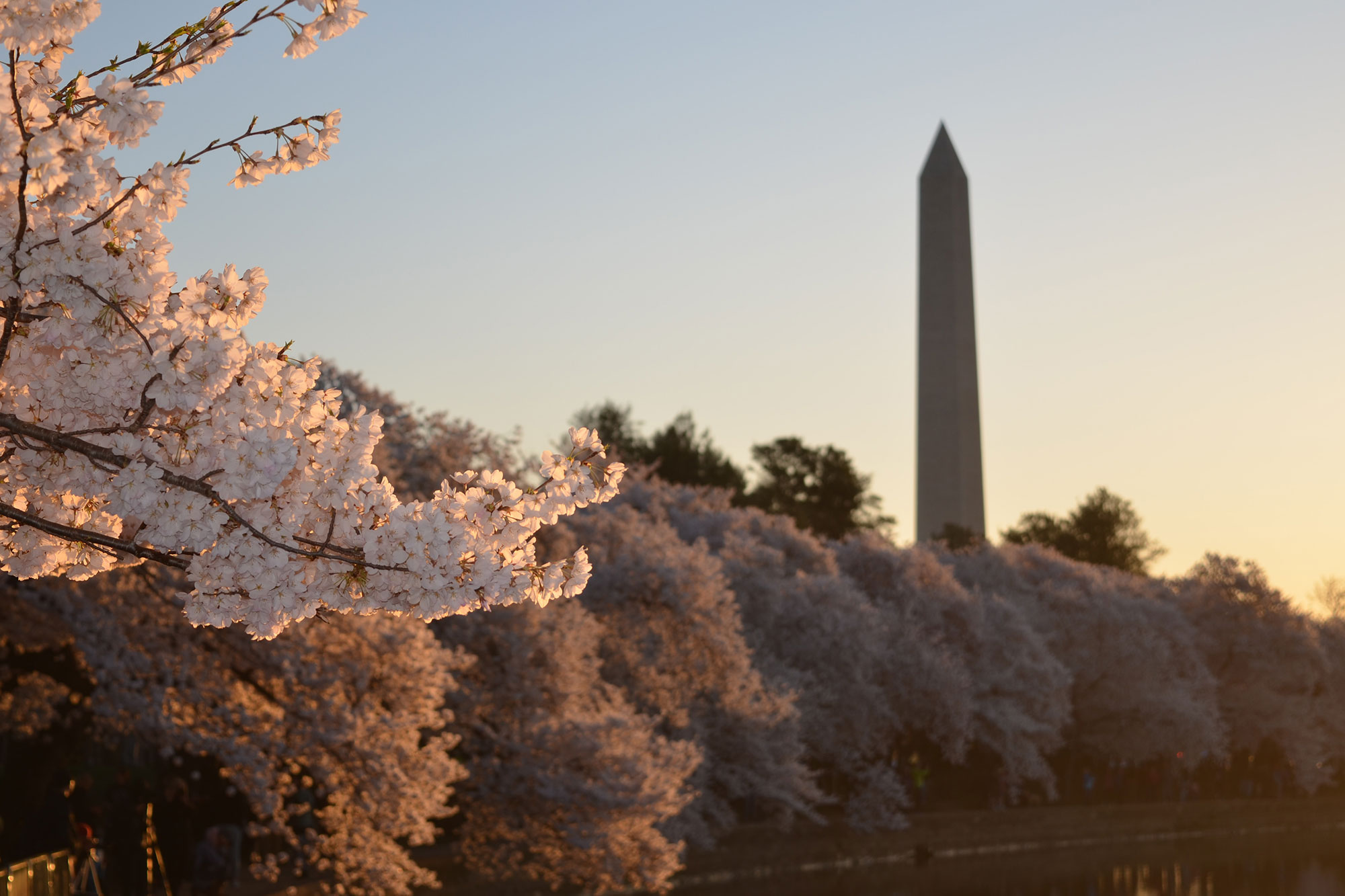Washington D.C.: The New Fashion Capitol